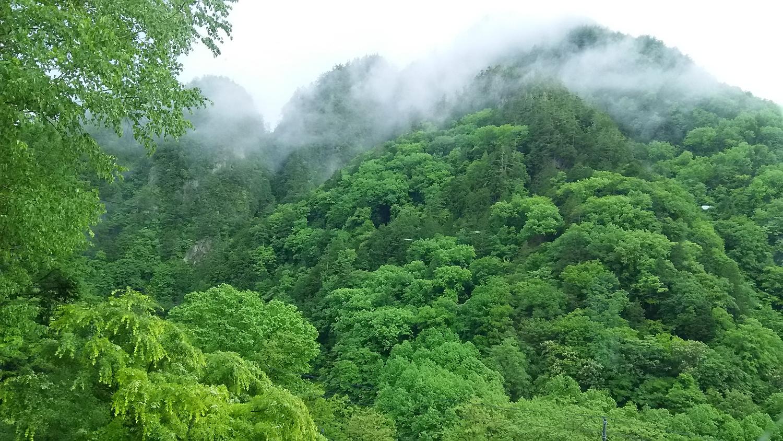 新緑の髭田山(七峰の山)